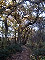 Stanley Marsh Nature Reserve - geograph.org.uk - 1052910.jpg
