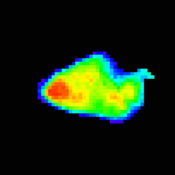 A false-color image of asteroid Annefrank showing the irregular shape of the small solar system body