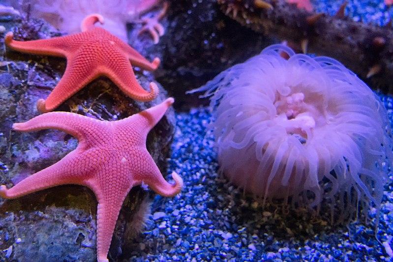 Estrellas de mar y anémona.