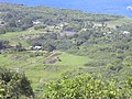Starr-040713-0128-Colocasia esculenta-loi-Wailua-Maui (24596743602).jpg