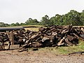 Starr-130605-4709-Sequoia sempervirens-pile of old flume parts being replaced-Olinda-Maui (25118336751).jpg