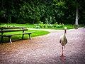Stork in the park 20000102.jpg