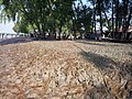 Sundarban (3).jpg