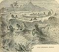 Surf Swimming, Hawaii.jpg