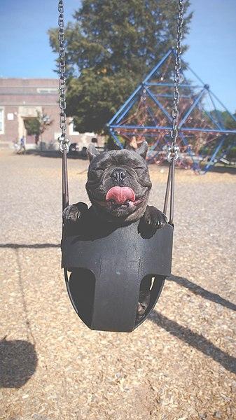 File:Swing Sparky, swing! (Unsplash).jpg