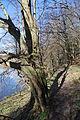 Týřov (národní přírodní rezervace) (16).jpg
