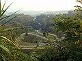 Taenia solium - panoramio.jpg