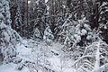 Talvine mets Paunküla MKA-l.JPG