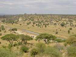 Tarangire nationalpark - Zebraer i Lake Manyara nationalpark