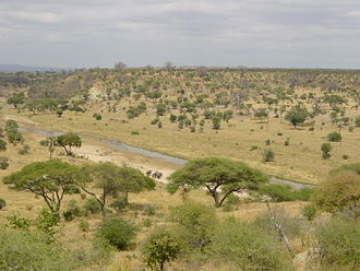 Savanna - Tarangire National Park in Tanzania, East Africa