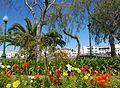Tavira (Portugal) (17143719114).jpg