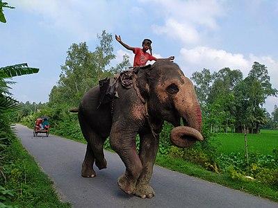 A teenage mahout.