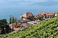 Terrasses de Lavaux - panoramio (63).jpg