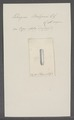 Tetragona belzonii - - Print - Iconographia Zoologica - Special Collections University of Amsterdam - UBAINV0274 080 09 0007.tif