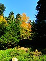 The Blue Sky and The Coloured Trees - panoramio.jpg