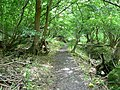The Cotswold Way, inside Dyrham Wood - geograph.org.uk - 479089.jpg