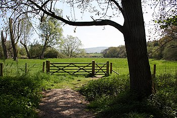 English: The Meadow Meadow within Woods Mill n...