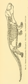 The Osteology of the Reptiles-262 kjh rty rt.png