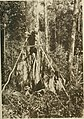 The pagan tribes of Borneo; a description of their physical, moral and intellectual condition, with some discussion of their ethnic relations (1912) (14782351564).jpg