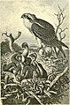 The royal natural history (1893) (14598162759).jpg