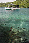 Tourist boat and fishes.jpg