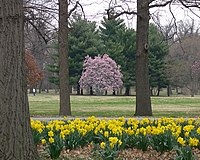 Tower Grove Park Scene 1.jpg