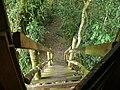 Tree House Stairway (17750333039).jpg