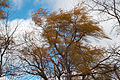 Trees fall colors 2759.jpg