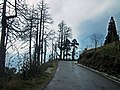 Trees in Darjeeling l Scenic View.jpg