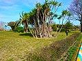 Trees like an Island - panoramio.jpg