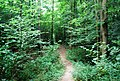 Tunbridge Wells Circular Path - Forge Wood - geograph.org.uk - 1492426.jpg
