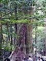 Ujitachicho, Ise, Mie Prefecture 516-0023, Japan - panoramio (22).jpg
