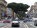 Umbrella.pine.in.rome.arp.jpg