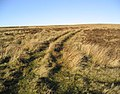 Upland grazing - geograph.org.uk - 298250.jpg