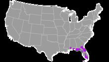 Ursus americanus floridanus.png
