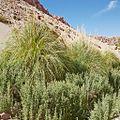 Valle de Jere-CTJ-IMG 5694.jpg
