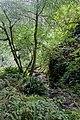 Van Damme State Park Fern Canyon 02.jpg