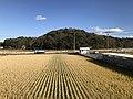 View from platform of Shin-Toyotsu Station.jpg