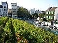 Vigne de Montmartre.jpg