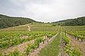 Vignes sur La-Roque-Alric by JM Rosier.JPG