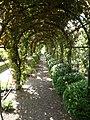 Vine pergola in Loseley Park gardens - geograph.org.uk - 881305.jpg
