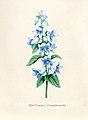 Vintage Flower illustration by Pierre-Joseph Redouté, digitally enhanced by rawpixel 99.jpg
