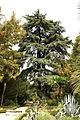 Visita al jardín botánico de Madrid.jpg