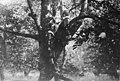Visite du prince Carol sur le front ; à droite, dans l'arbre, la princesse Ileana - Médiathèque de l'architecture et du patrimoine - AP62T103536.jpg
