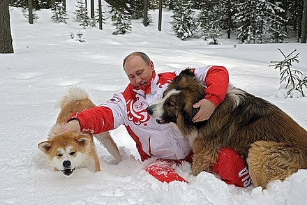Putin with Yume and Buffy in 2013 Vladimir Putin 24 March 2013 (9).jpeg
