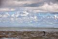 Wadden Sea Suva MatthiasSuessen-8473.jpg