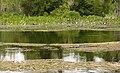 Wakulla-springs 2009-05-04T18 56 40.jpg