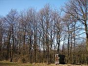 Wald026