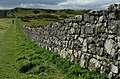 Wall by the North Antrim Cliff Path - geograph.org.uk - 1256092.jpg