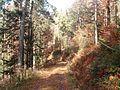 Wanderung im November - panoramio (39).jpg